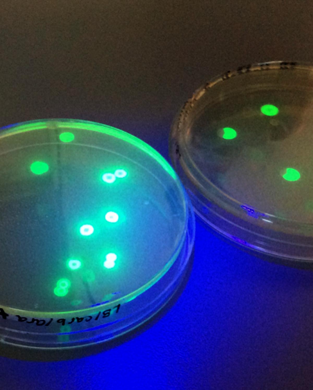 petri-dish-2