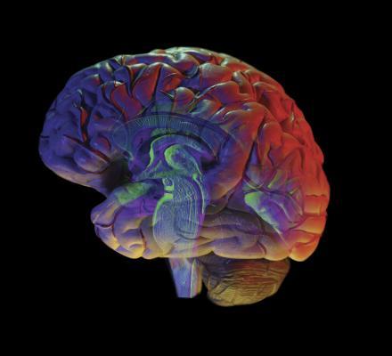 brain colorful