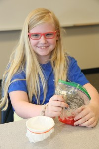 A girl macerates a strawberry to prepare for DNA extraction (Photo credit: Michael Mercier/UAH).