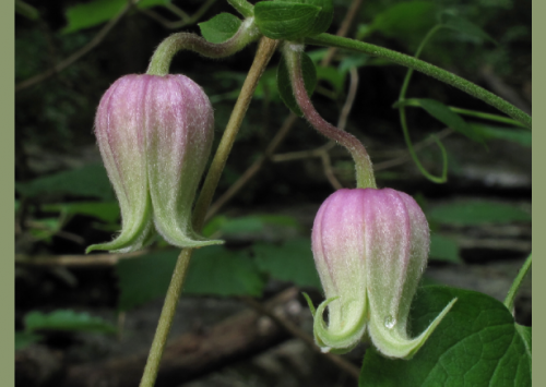 HudsonAlpha, Alabama Bicentennial Commission to decode Alabama plants
