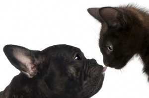black-cat-dog-670-300x197
