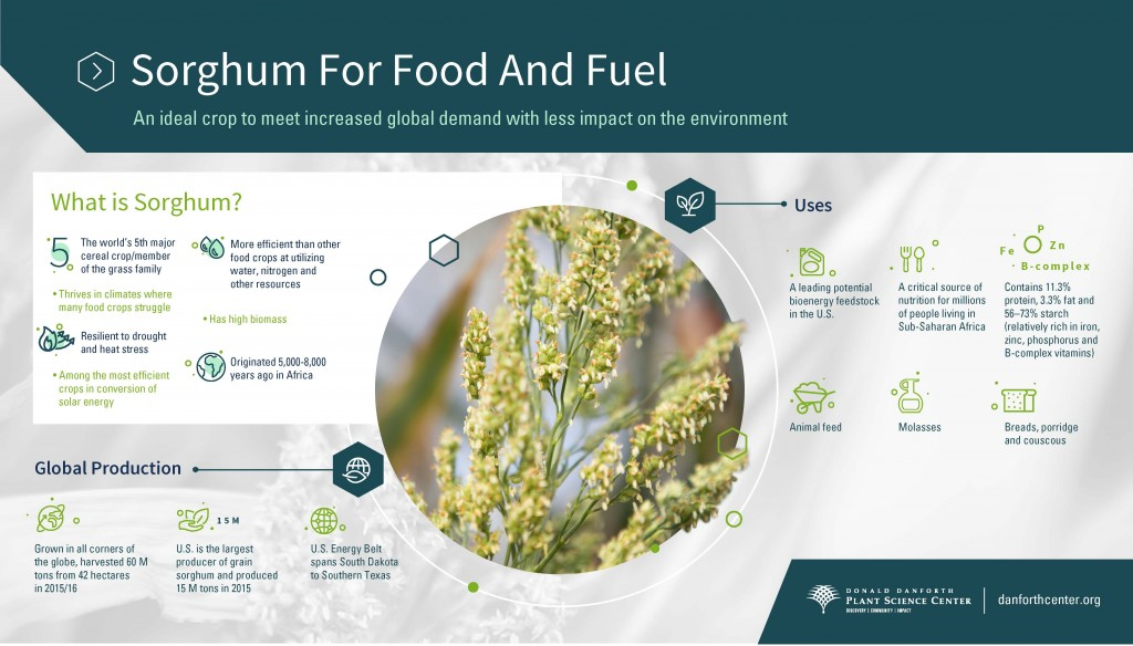 phd thesis animal nutrition